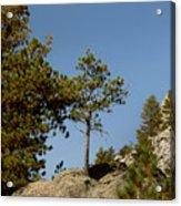 Black Hills Lone Tree Acrylic Print