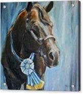 Black Horse Blue Ribbon Acrylic Print