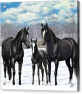 Black Horses In Winter Pasture Acrylic Print by Crista Forest