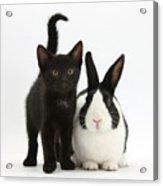 Black Kitten And Dutch Rabbit Acrylic Print by Mark Taylor