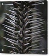 Black Knight. Flora Fantasy 6.14.17  Acrylic Print