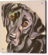 Black Lab Aint No Cure For Love Acrylic Print