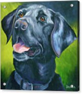 Black Lab Forever Acrylic Print by Susan A Becker