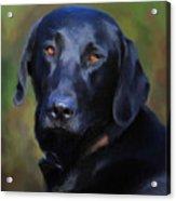Black Lab Portrait Acrylic Print