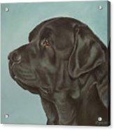 Black Labrador Dog Profile Painting Acrylic Print