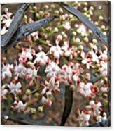 Black Lace Elderberry With Raindrops Acrylic Print