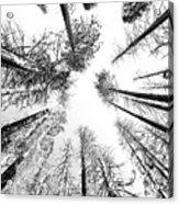Black N White Sky-trees Acrylic Print