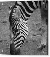 Black N White Stripes Acrylic Print
