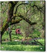 Black Oak And Creek Acrylic Print