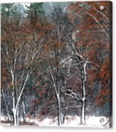 Black Oaks In Snowstorm Yosemite National Park Acrylic Print