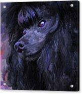 Black Poodle Acrylic Print
