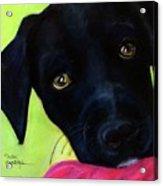 Black Puppy - Shelter Dog Acrylic Print