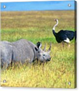 Black Rhinocerous Acrylic Print