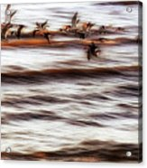 Black Skimmers Of Long Beach - Mississippi - Birds Acrylic Print