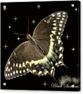 Black Swallowtail On Black Acrylic Print
