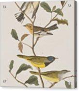 Black Throated Green Warbler Blackburnian Mourning Warbler Acrylic Print