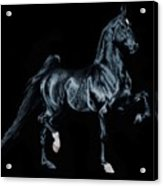 Black Tie Affair Featuring Saddlebred Champion Undulata's Made In Heaven Acrylic Print
