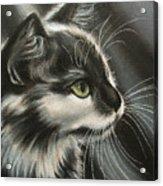 Black-white Acrylic Print