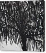 Black Willow Acrylic Print