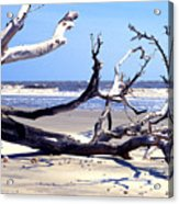 Blackbeard Island Beach Acrylic Print by Thomas R Fletcher