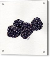 Blackberries Acrylic Print