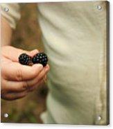 Blackberry Baby Acrylic Print