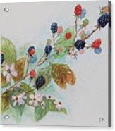 Blackberry Composition Acrylic Print