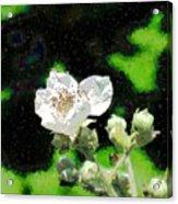 Blackberry Of My Eye Acrylic Print
