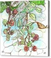 Blackberry Acrylic Print