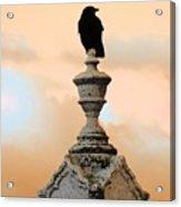 Blackbird And A Coral Sky Acrylic Print