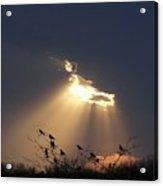 Blackbird Sky Acrylic Print