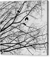 Blackened Birds Acrylic Print
