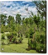 Blackwater Swamp Acrylic Print