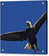 Blad Eagle In Flight-signed- #2699 Acrylic Print