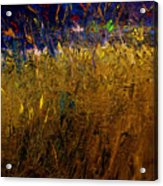 Blades Of Grass Acrylic Print