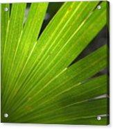 Blades Of Green Acrylic Print