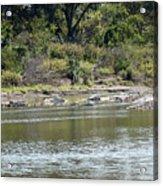 Blanco River - Texas Acrylic Print