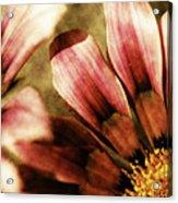 Blanket Flowers Acrylic Print by Bonnie Bruno