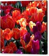 Blankets Of Tulips Acrylic Print