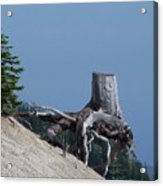 Blasted Stump  Acrylic Print