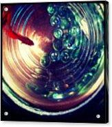 Blaze I Acrylic Print by Kevin Bergen