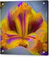 Blazing Heart Of An Iris Acrylic Print