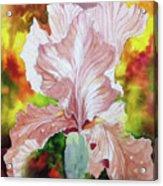 Blazing Iris Acrylic Print