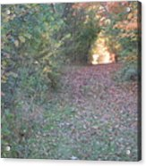Blazing Trail Acrylic Print