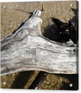 Bleached Driftwood Acrylic Print