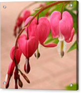 Bleeding Hearts In The Park Acrylic Print