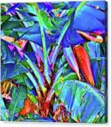 Bleu Banana Acrylic Print