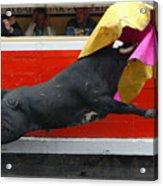 Blind Bull Acrylic Print