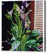 Blind Luck Lilies Acrylic Print
