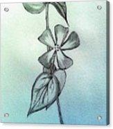 Bliss Acrylic Print